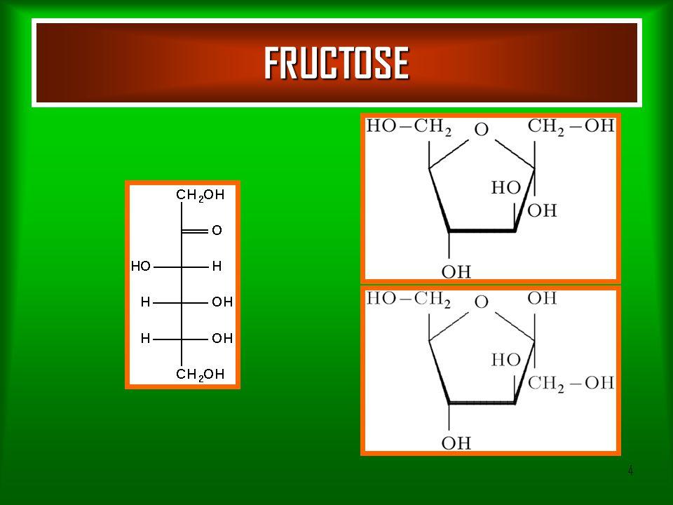 5 Absorption of monosaccharides Transporters: – GLUT-5 – GLUT-2 – Glucose