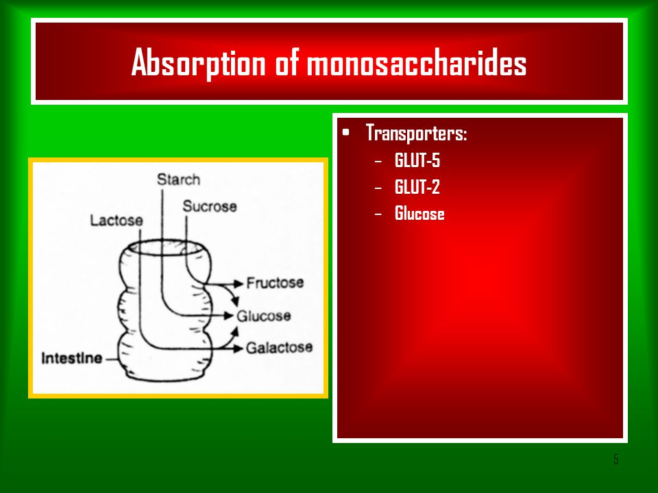 5 Absorption of monosaccharides Transporters: – GLUT-5 – GLUT-2 – Glucose