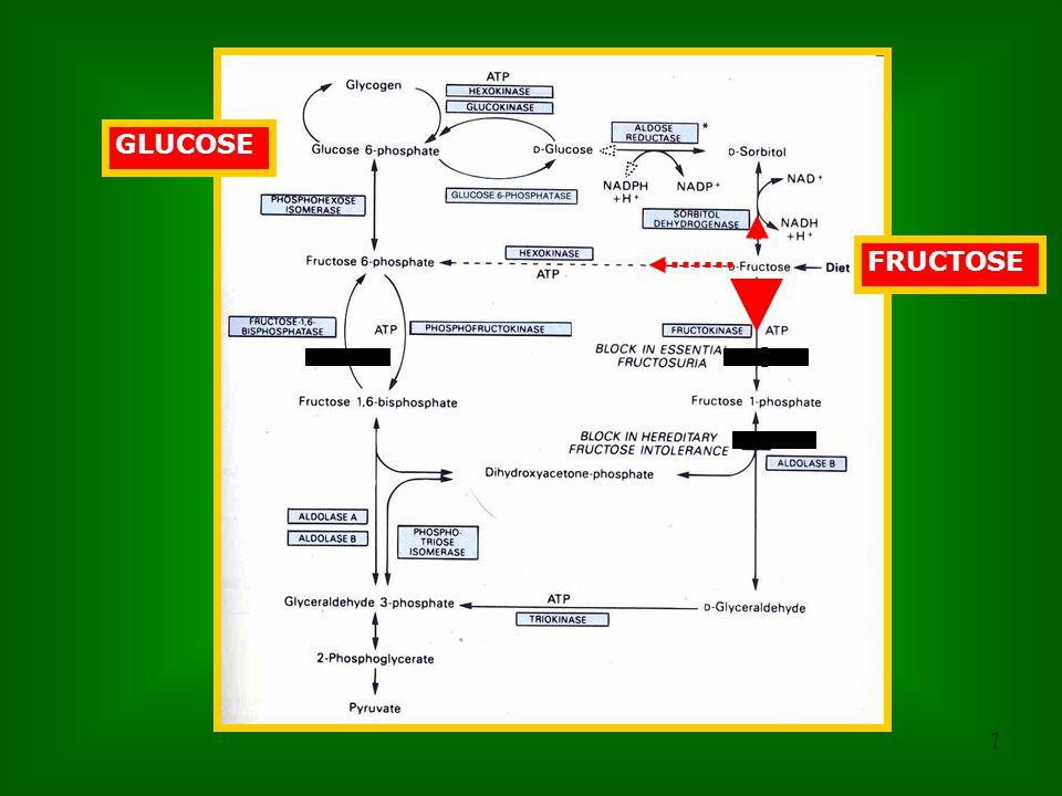 18 0 FRUKTÓZ GLUKÓZ [Fruktóz-1-P]  Foszfát-hiány A hipoglikémia kialakulásának valószín ű oka