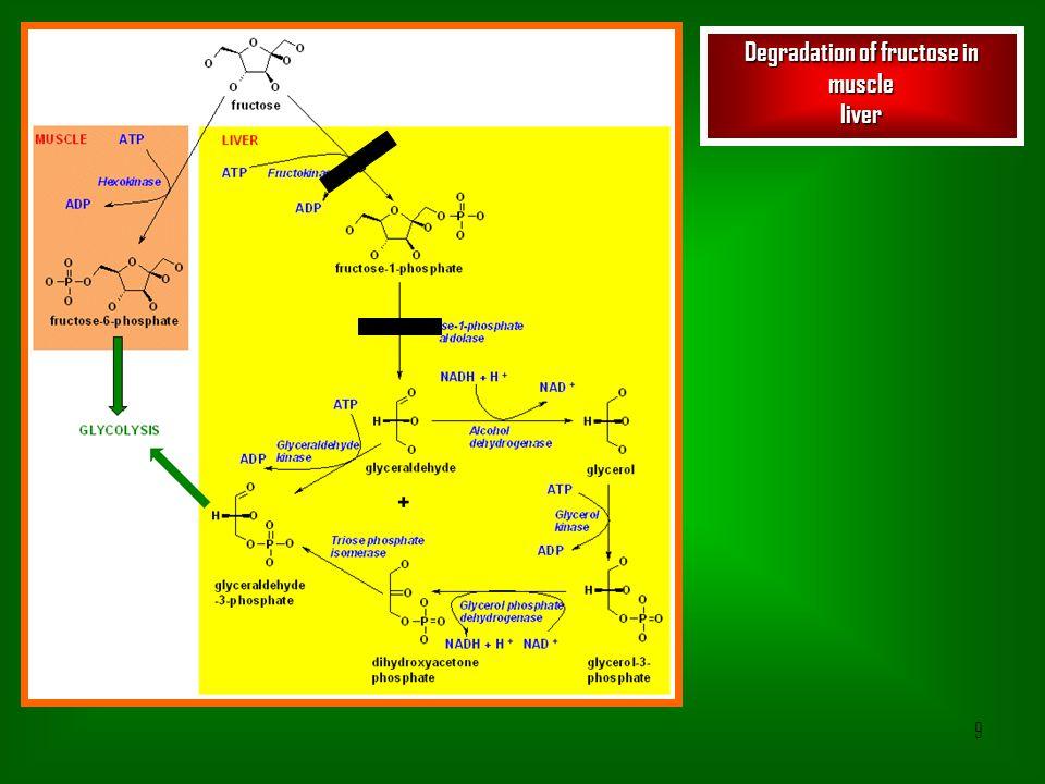 10 Formation of methylglyoxal