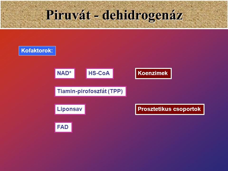 Pyruvate-dehydrogenase (PDH) Glucose Pyruvate Pyruvate-dehydrogenase enzyme complex glycolysis