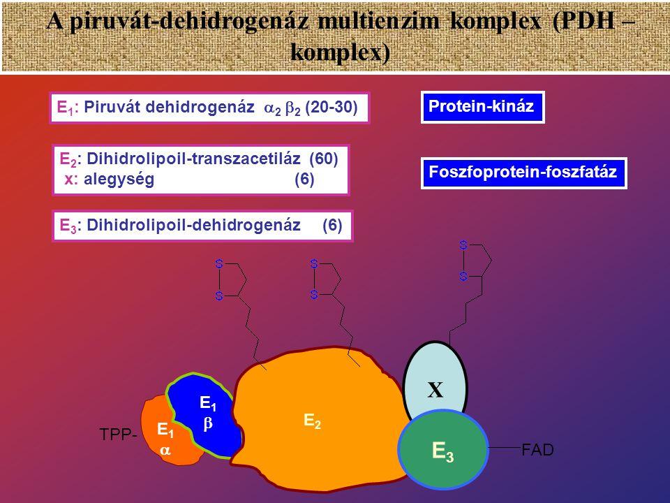 Piruvát - dehidrogenáz Kofaktorok: NAD + HS-CoAKoenzimek Tiamin-pirofoszfát (TPP) Liponsav FAD Prosztetikus csoportok