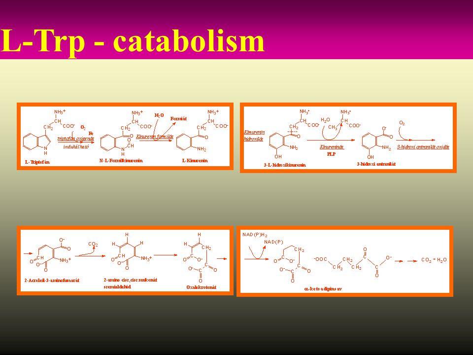 L-Trp - catabolism