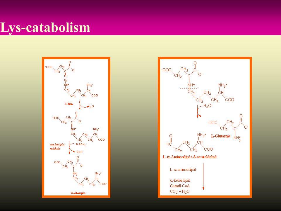 Lys-catabolism