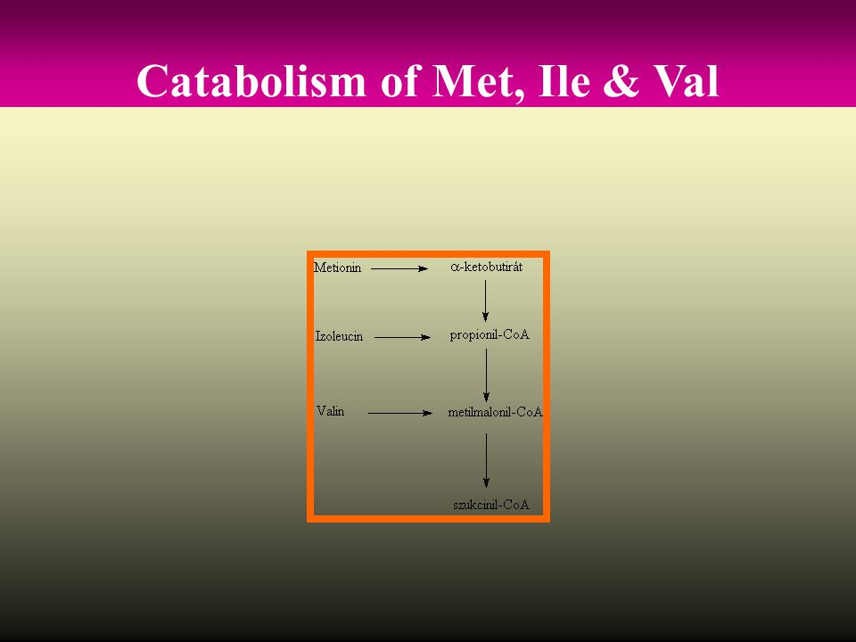 Catabolism of Met, Ile & Val