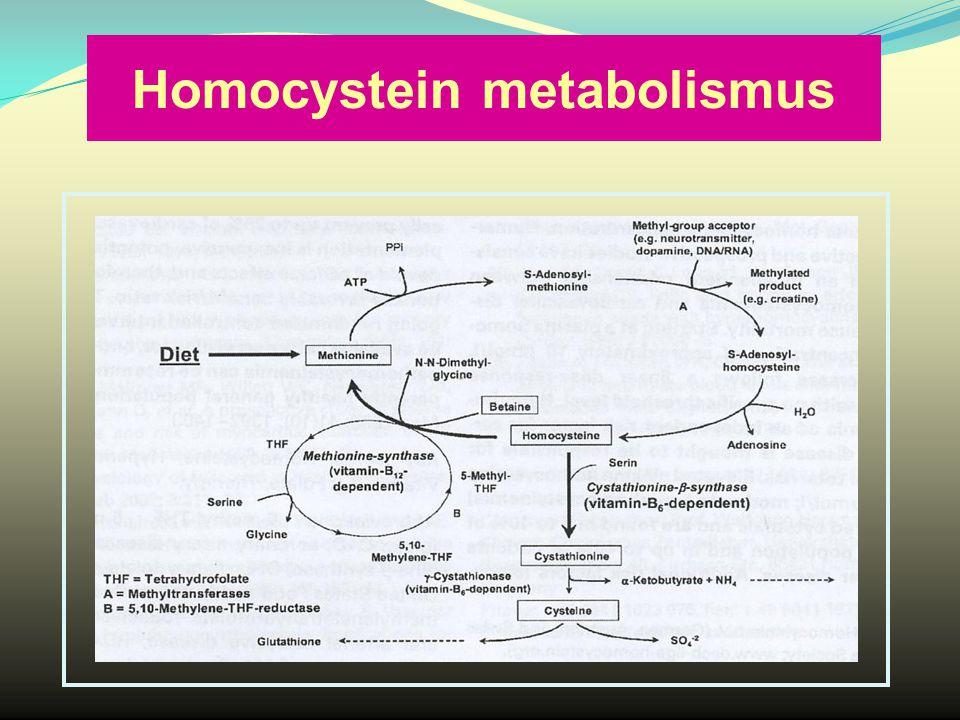 Homocystein metabolismus