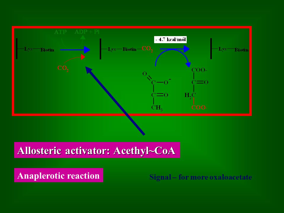 Allosteric activator: Acethyl~CoA Anaplerotic reaction Signal – for more oxaloacetate