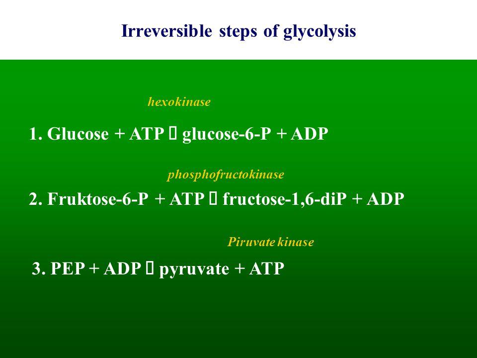 Irreversible steps of glycolysis 1. Glucose + ATP  glucose-6-P + ADP hexokinase 2. Fruktose-6-P + ATP  fructose-1,6-diP + ADP phosphofructokinase 3.