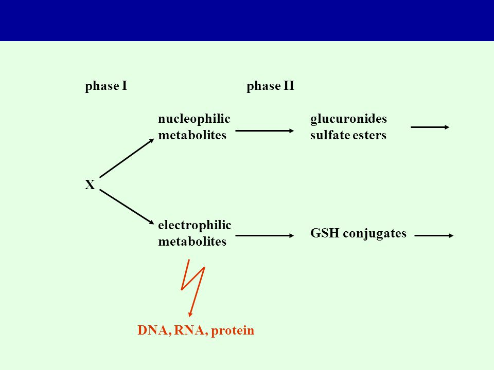 phase Iphase II nucleophilic metabolites glucuronides sulfate esters electrophilic metabolites GSH conjugates X DNA, RNA, protein