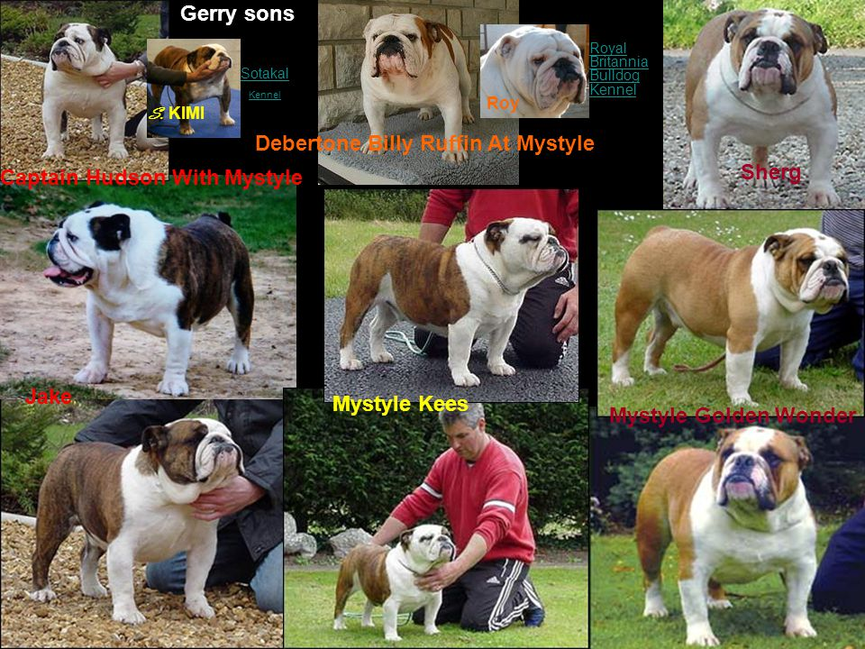 Sotakal Kennel Royal Britannia Bulldog KennelRoyal Britannia Bulldog Kennel Captain Hudson With Mystyle Jake Debertone Billy Ruffin At Mystyle Mystyle