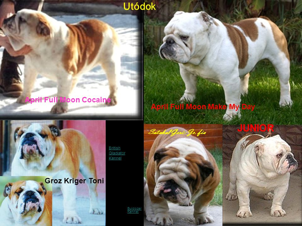 NO END OF PROGENY Buldozer KennelBuldozer Kennel April Full Moon Cocaine April Full Moon Make My Day Groz Kriger Toni JUNIOR Utódok Sotakal Geri:: Jr.