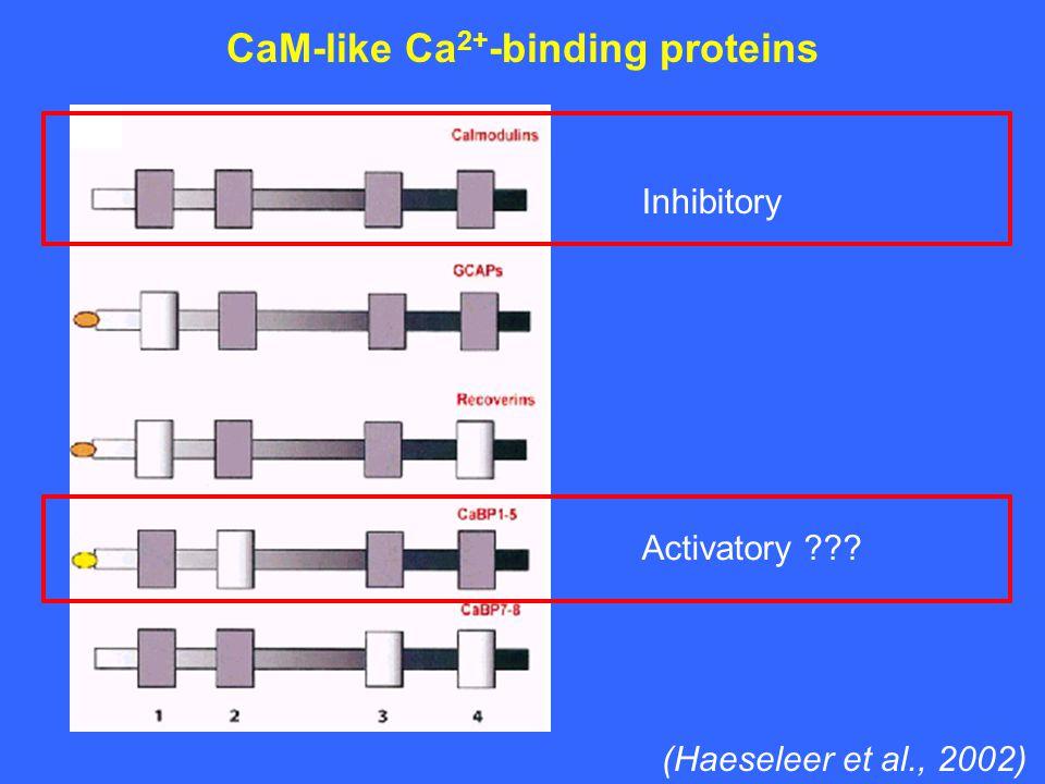 CaM-like Ca 2+ -binding proteins Inhibitory Activatory ??? (Haeseleer et al., 2002)