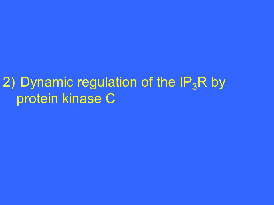 1) Dynamics concerning the intracellular localization of the IP 3 R 2) Dynamic regulation of the IP 3 R by protein kinase C 3) Activation of an IP 3 -independent pathway by IP 3 R1 cleavage through caspase-3