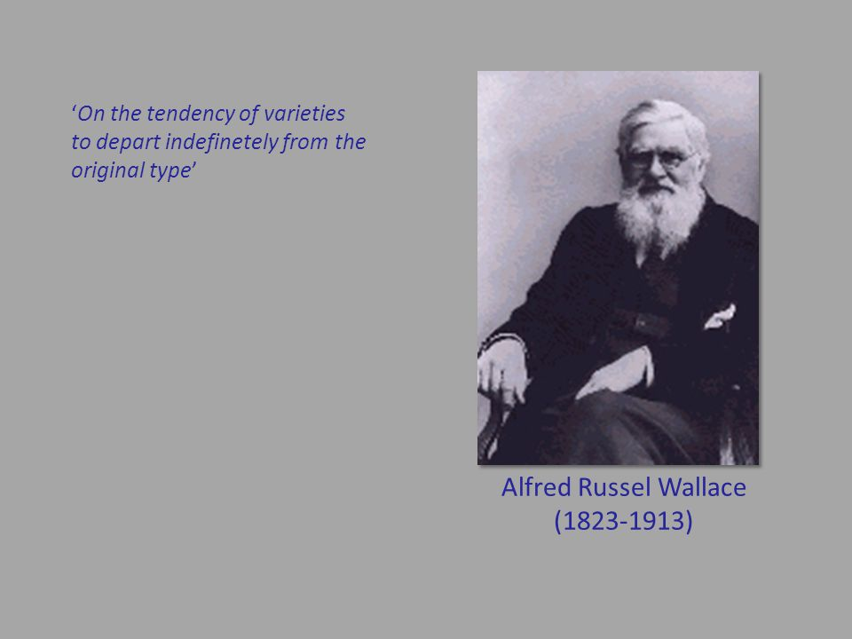 Alfred Russel Wallace (1823-1913) 'On the tendency of varieties to depart indefinetely from the original type'