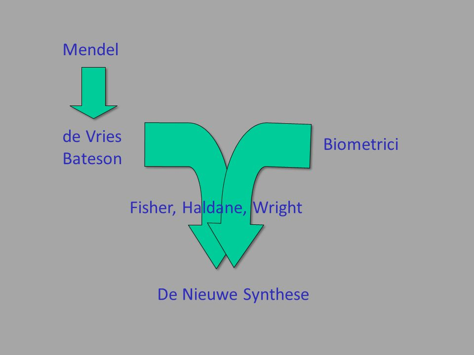 Mendel de Vries Bateson Biometrici Fisher, Haldane, Wright De Nieuwe Synthese