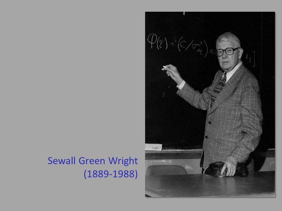 Sewall Green Wright (1889-1988)