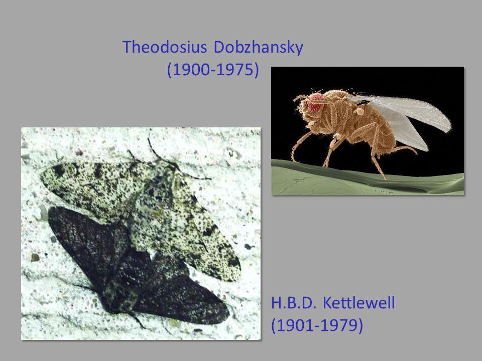 Theodosius Dobzhansky (1900-1975) H.B.D. Kettlewell (1901-1979)