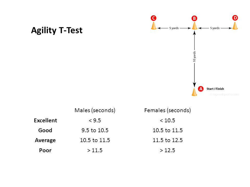 Agility T-Test Males (seconds)Females (seconds) Excellent< 9.5< 10.5 Good9.5 to 10.510.5 to 11.5 Average10.5 to 11.511.5 to 12.5 Poor> 11.5> 12.5