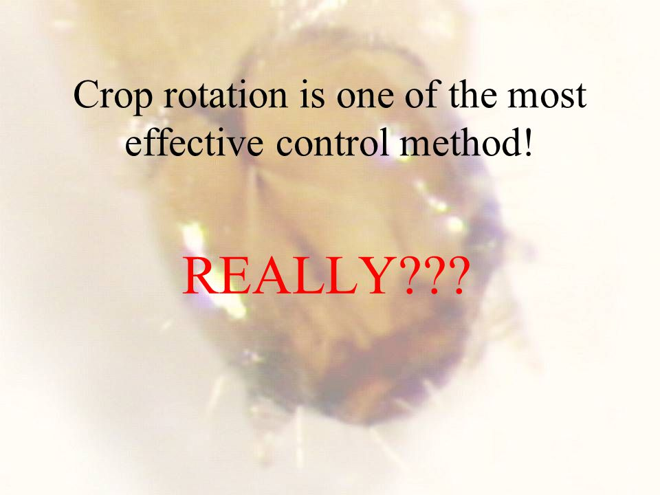 Crop rotation is one of the most effective control method! REALLY???