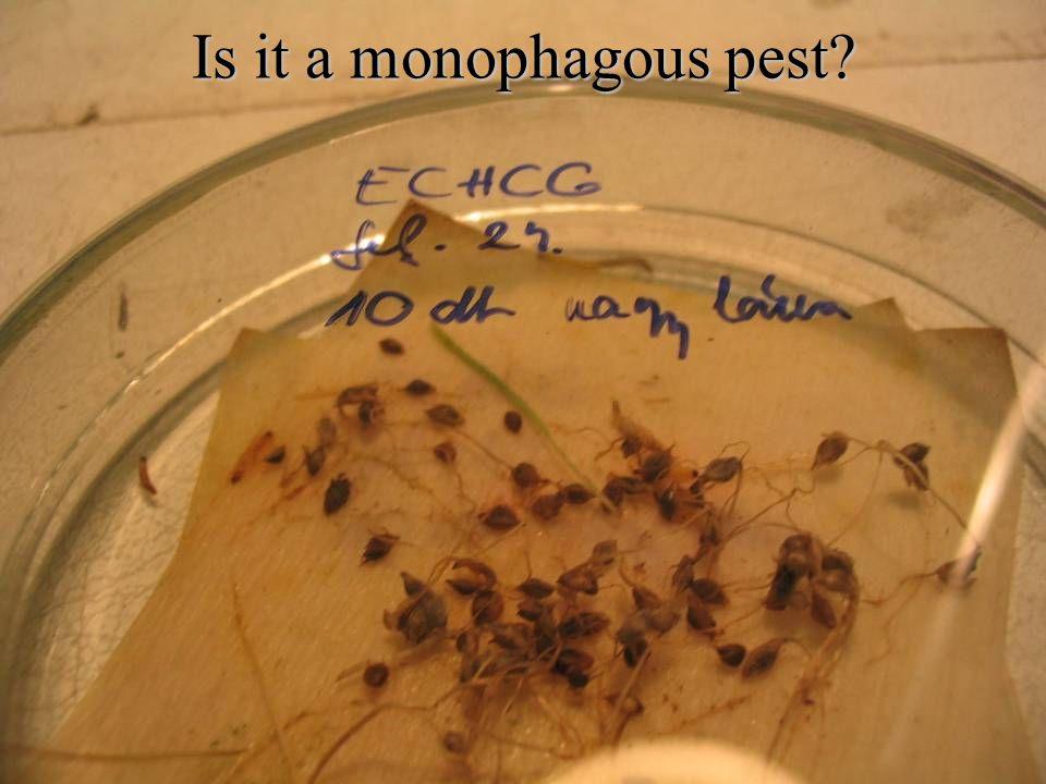 Is it a monophagous pest
