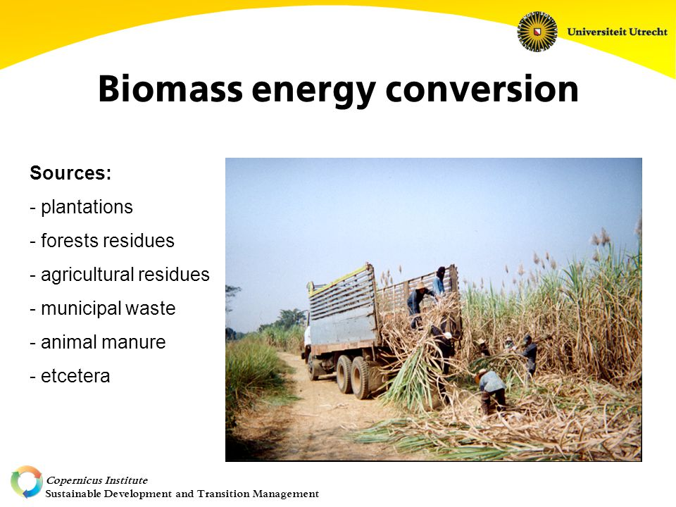 Copernicus Institute Sustainable Development and Transition Management Biomass energy conversion Sources: - plantations - forests residues - agricultural residues - municipal waste - animal manure - etcetera