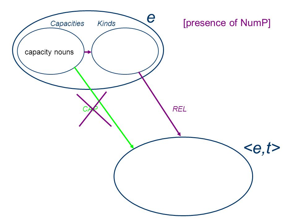 e capacity nouns Capacities CAP [presence of NumP] Kinds REL