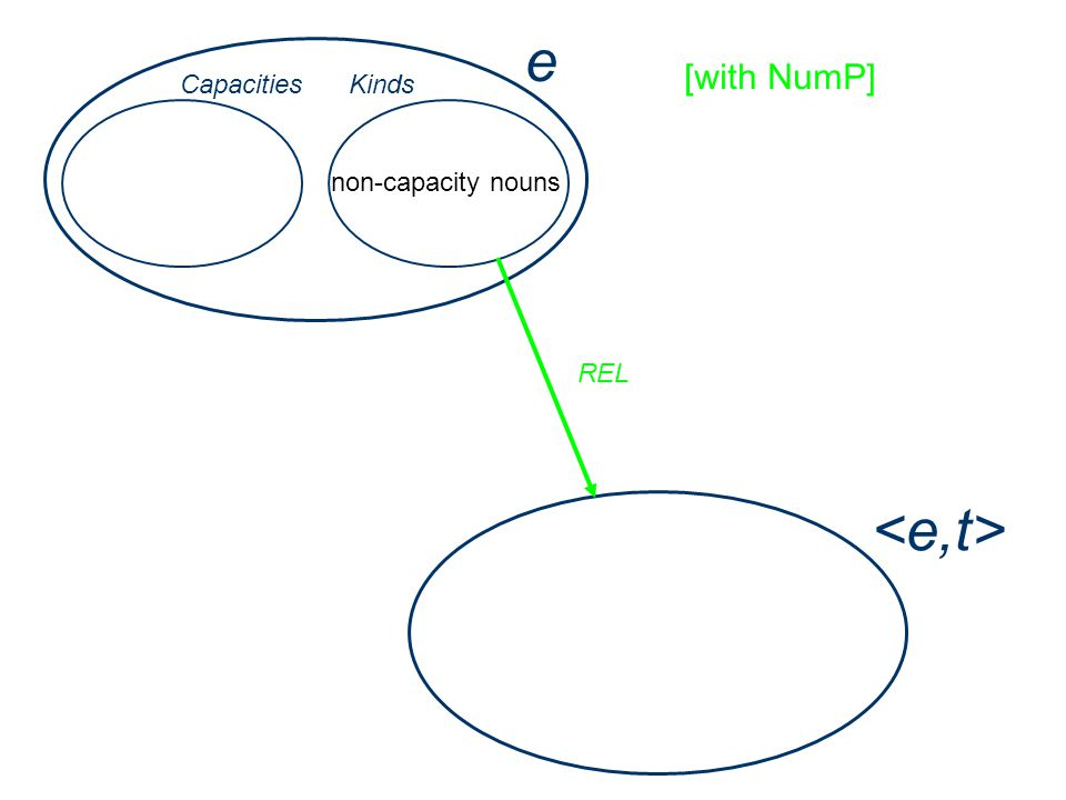 e Capacities non-capacity nouns Kinds REL [with NumP]