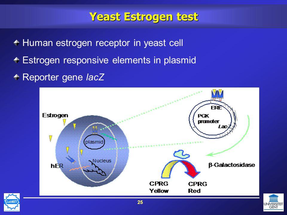 25 Yeast Estrogen test Human estrogen receptor in yeast cell Estrogen responsive elements in plasmid Reporter gene lacZ