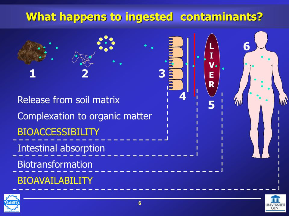 7 Bioavailability versus Bioaccessibility Bioavailability (in vivo studies) Fraction of a contaminant in the blood compartment Time-consuming, variable, ethical problems Release/complexation processes are a black box Bioaccessibility (in vitro studies) Fraction of a contaminant which releases from soil and which becomes available for intestinal transport Important precursor to bioavailability Estimate Bioavailability by measuring Bioaccessibility