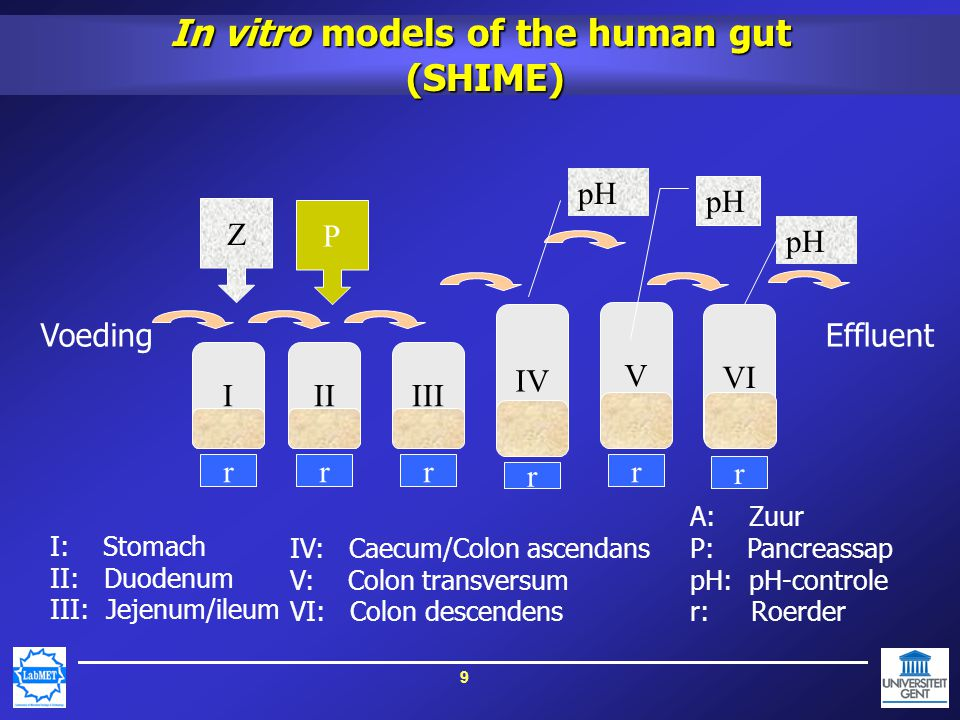 9 In vitro models of the human gut (SHIME) II r III r Z P I: Stomach II: Duodenum III: Jejenum/ileum IV: Caecum/Colon ascendans V: Colon transversum VI: Colon descendens A: Zuur P: Pancreassap pH: pH-controle r: Roerder I r Voeding IV r pH V r VI r pH Effluent