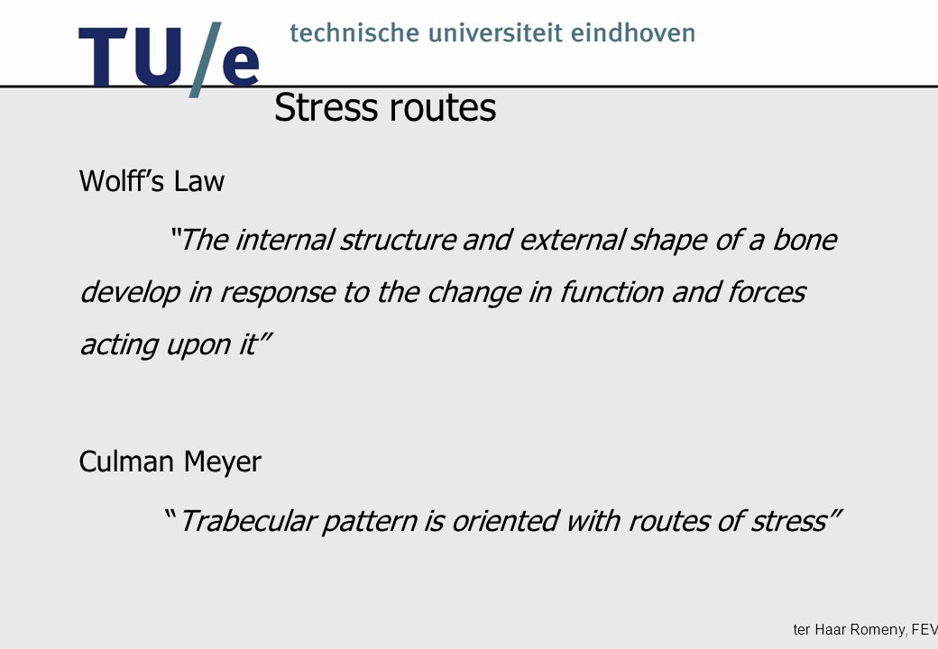 ter Haar Romeny, FEV Stress routes Wolff's Law The internal structure and external shape of a bone develop in response to the change in function and forces acting upon it Culman Meyer Trabecular pattern is oriented with routes of stress