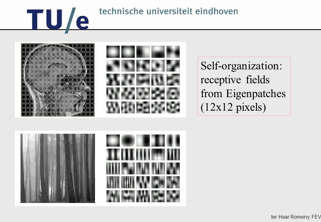 ter Haar Romeny, FEV Self-organization: receptive fields from Eigenpatches (12x12 pixels)