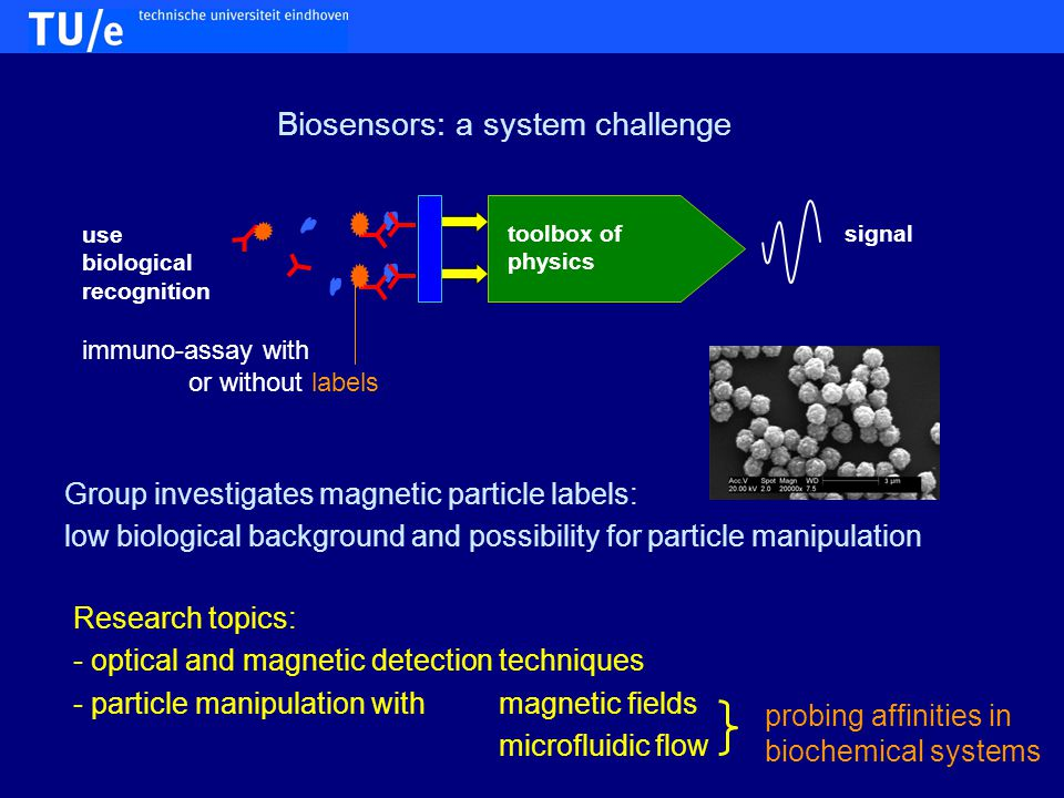 use biological recognition toolbox of physics signal Biosensors: a system challenge immuno-assay with or without labels Research topics: - optical and magnetic detection techniques - particle manipulation with magnetic fields microfluidic flow Group investigates magnetic particle labels: low biological background and possibility for particle manipulation probing affinities in biochemical systems
