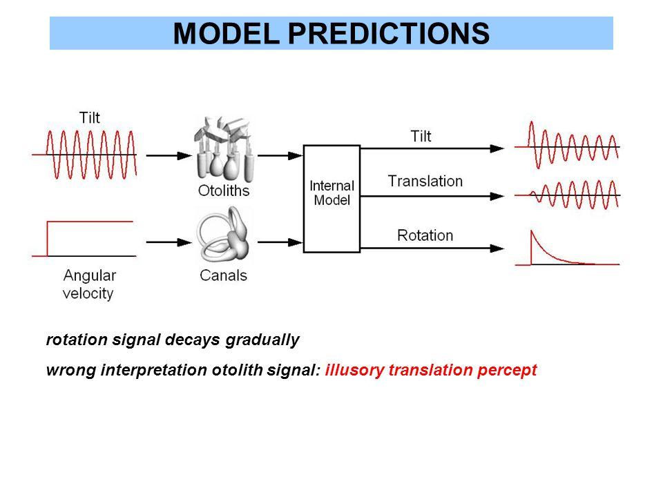 MODEL PREDICTIONS rotation signal decays gradually wrong interpretation otolith signal: illusory translation percept