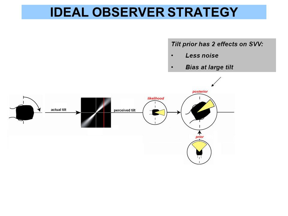 IDEAL OBSERVER STRATEGY Tilt prior has 2 effects on SVV: Less noise Bias at large tilt