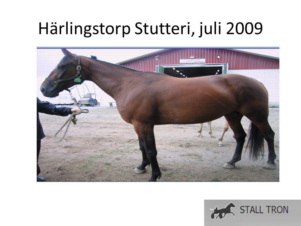 Fakta Brun hoppe født 11.april 2002 Tot.