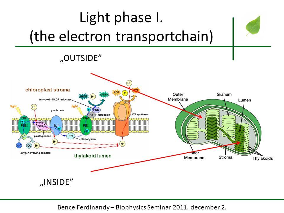 "Bence Ferdinandy – Biophysics Seminar 2011. december 2. Light phase I. (the electron transportchain) ""OUTSIDE"" ""INSIDE"""