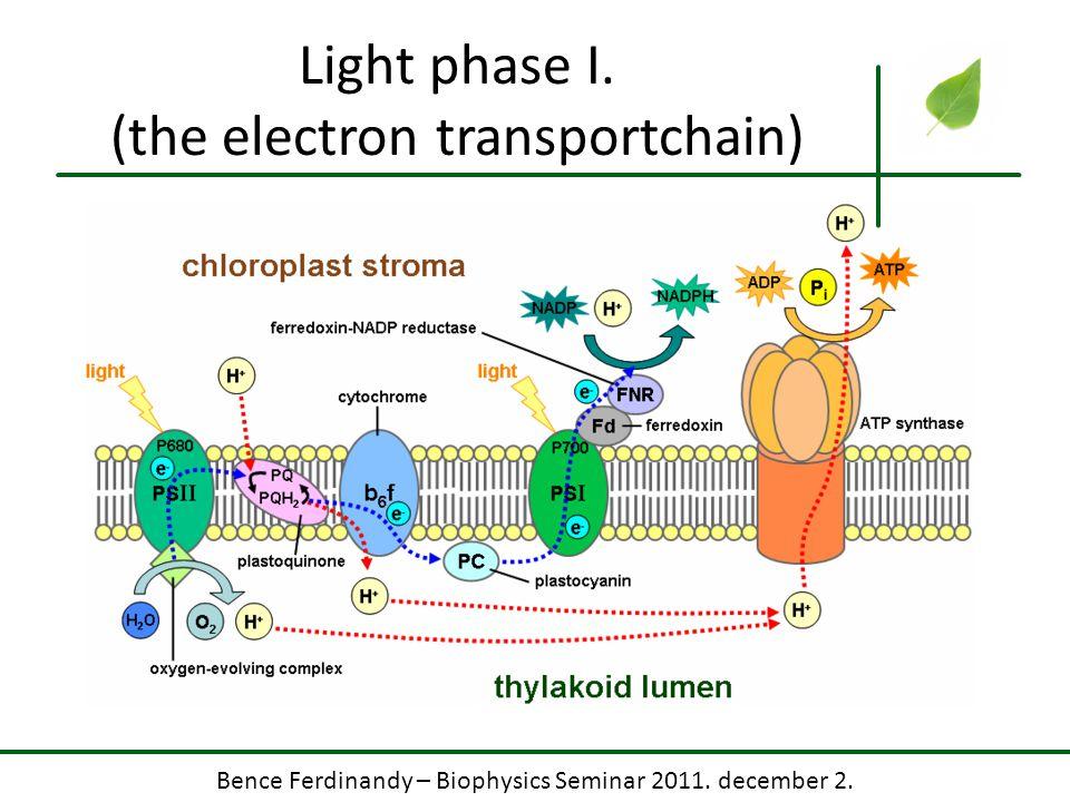 Bence Ferdinandy – Biophysics Seminar 2011. december 2. Light phase I. (the electron transportchain)