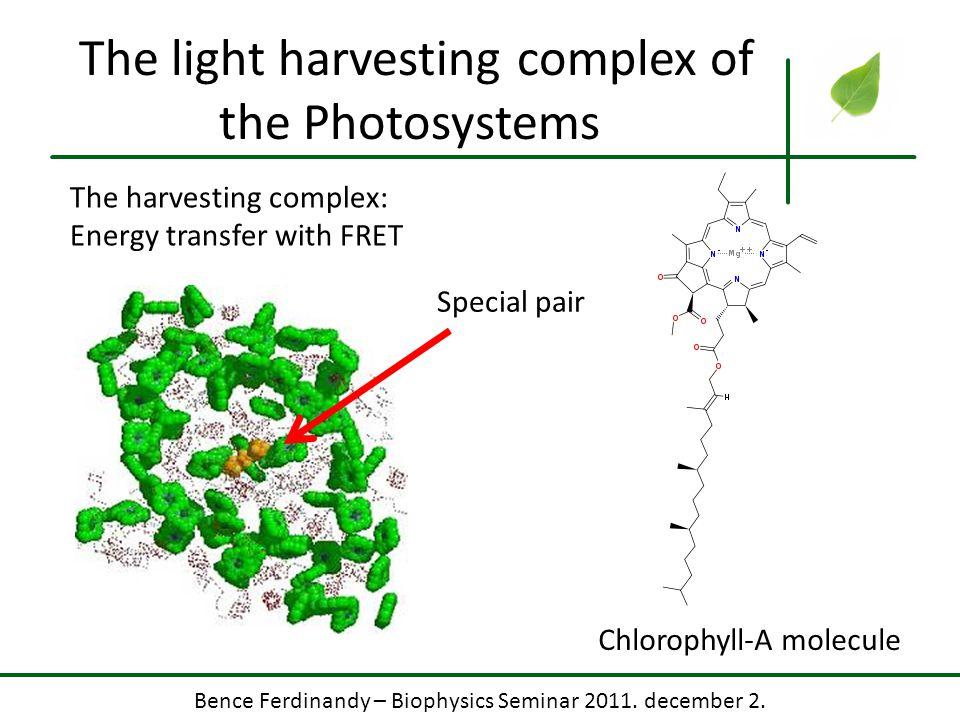 Bence Ferdinandy – Biophysics Seminar 2011. december 2. The light harvesting complex of the Photosystems The harvesting complex: Energy transfer with