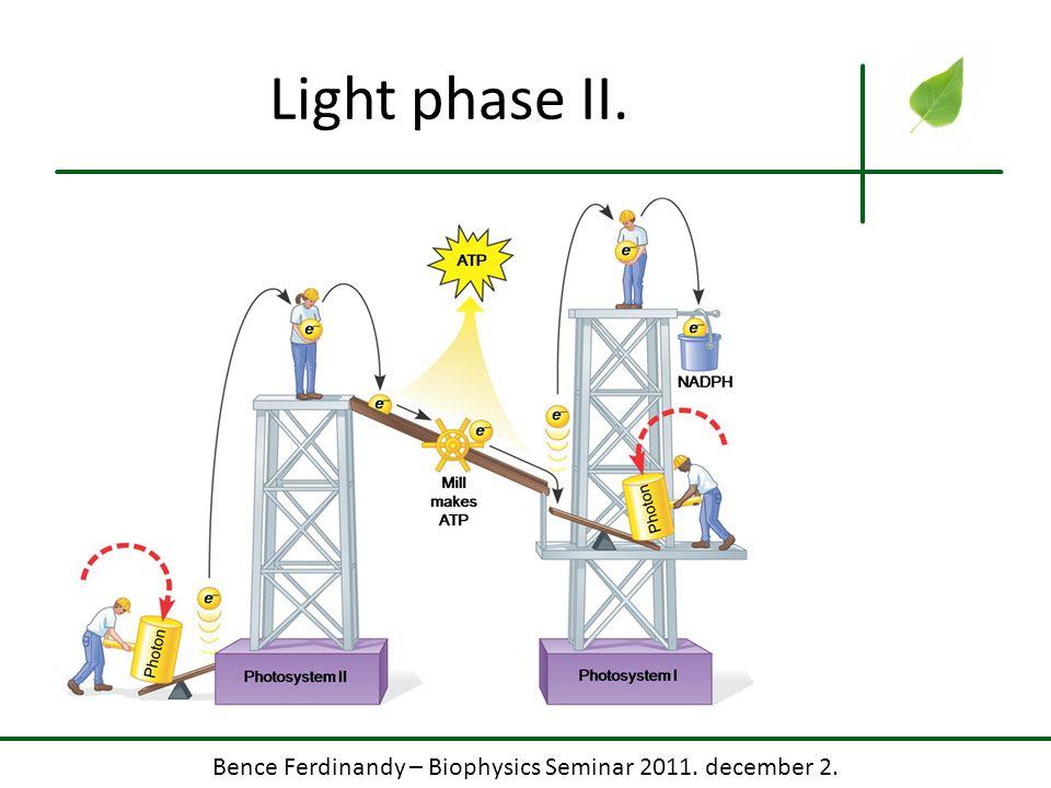 Bence Ferdinandy – Biophysics Seminar 2011. december 2. Light phase II.