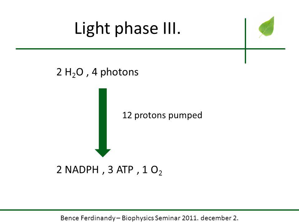 Bence Ferdinandy – Biophysics Seminar 2011. december 2.. Light phase III. 2 H 2 O, 4 photons 2 NADPH, 3 ATP, 1 O 2 12 protons pumped