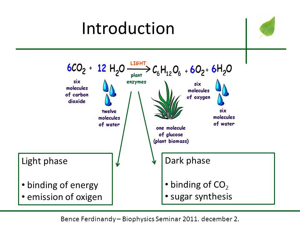 Bence Ferdinandy – Biophysics Seminar 2011. december 2. Introduction Light phase binding of energy emission of oxigen Dark phase binding of CO 2 sugar