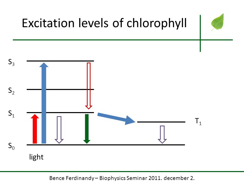 Bence Ferdinandy – Biophysics Seminar 2011. december 2. Excitation levels of chlorophyll S0S0 S1S1 S2S2 S3S3 T1T1 light