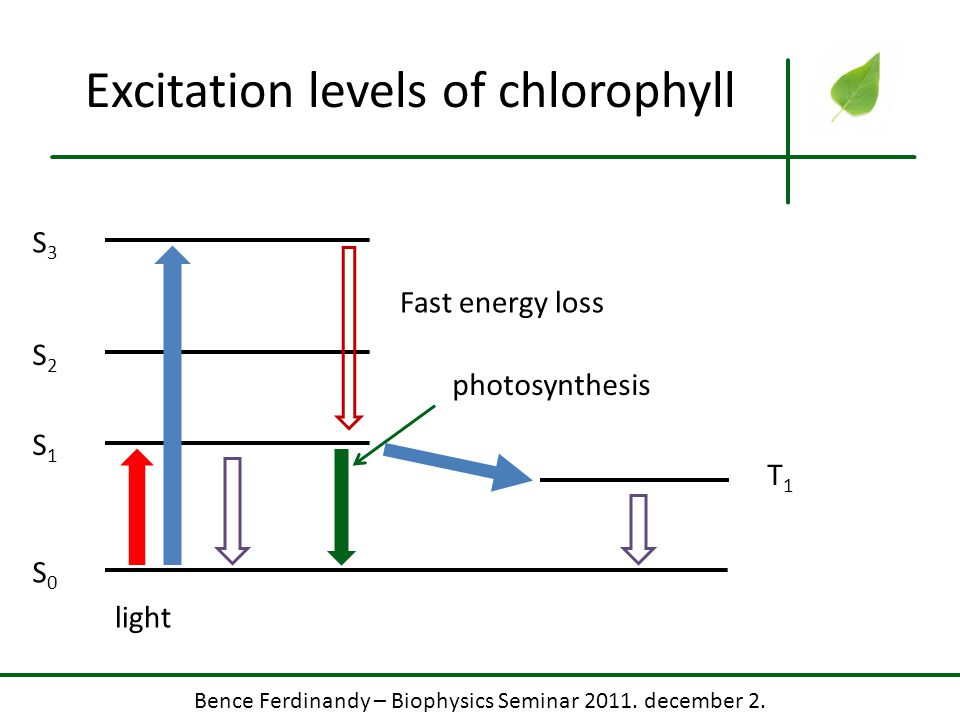 Bence Ferdinandy – Biophysics Seminar 2011. december 2. Excitation levels of chlorophyll S0S0 S1S1 S2S2 S3S3 T1T1 light Fast energy loss photosynthesi