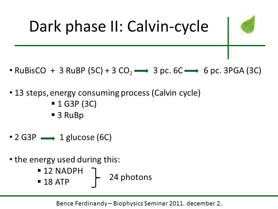 Bence Ferdinandy – Biophysics Seminar 2011. december 2. Dark phase II: Calvin-cycle RuBisCO + 3 RuBP (5C) + 3 CO 2 3 pc. 6C 6 pc. 3PGA (3C) 13 steps,