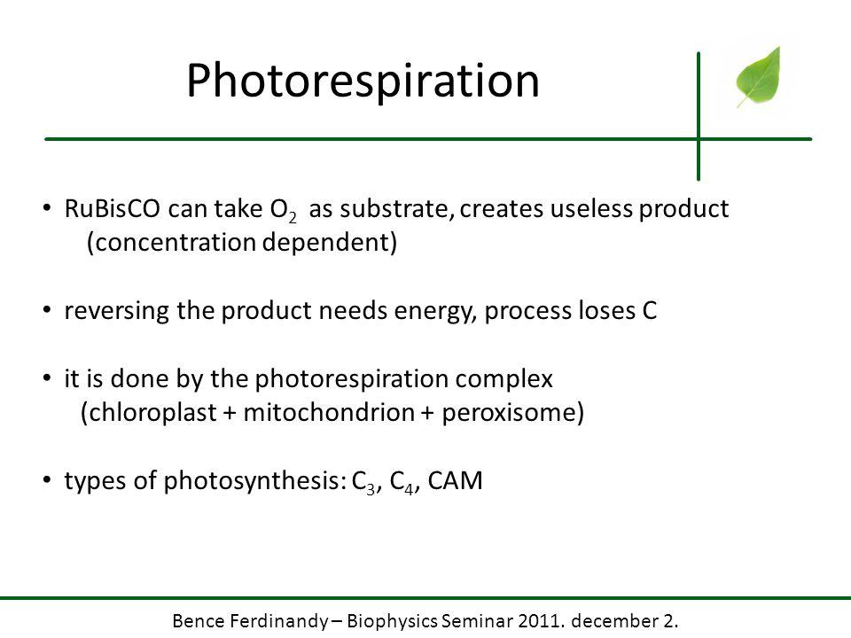 Bence Ferdinandy – Biophysics Seminar 2011. december 2. Photorespiration RuBisCO can take O 2 as substrate, creates useless product (concentration dep