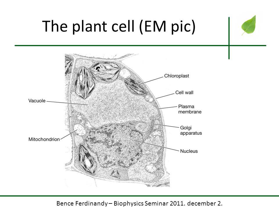 Bence Ferdinandy – Biophysics Seminar 2011. december 2. Calvin cycle