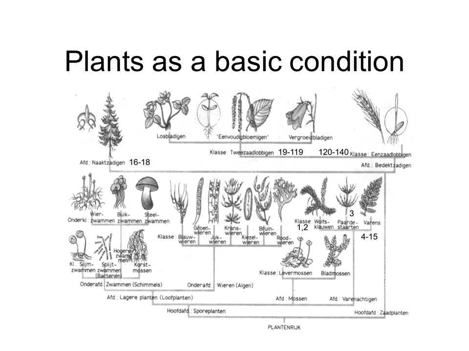 Plants as a basic condition