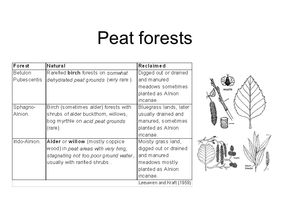 Peat forests