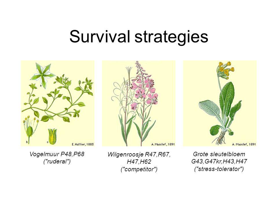 Survival strategies Vogelmuur P48,P68 ( ruderal ) Wilgenroosje R47,R67, H47,H62 ( competitor ) Grote sleutelbloem G43,G47kr,H43,H47 ( stress-tolerator )